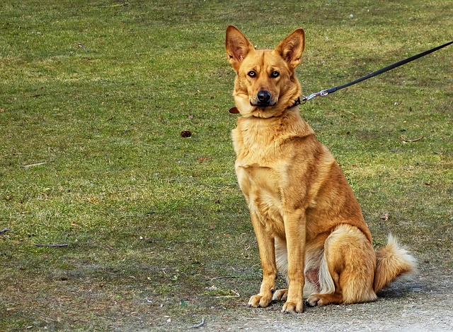 what you need to know when having a dog in germany_keep your dog on a lead or leash_cat and dog_pets in germany_bring your pets to germany or getting one in germany_my life in germany_hkwomanabroad