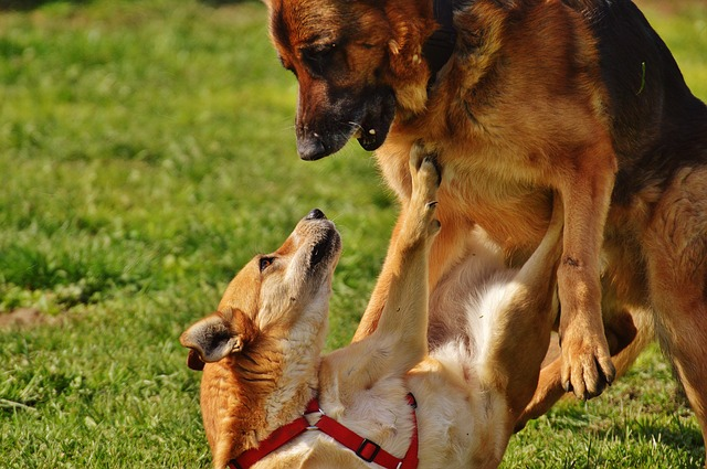 dog liability insurance_cat and dog_pets in germany_bring your pets to germany or getting one in germany_my life in germany_hkwomanabroad