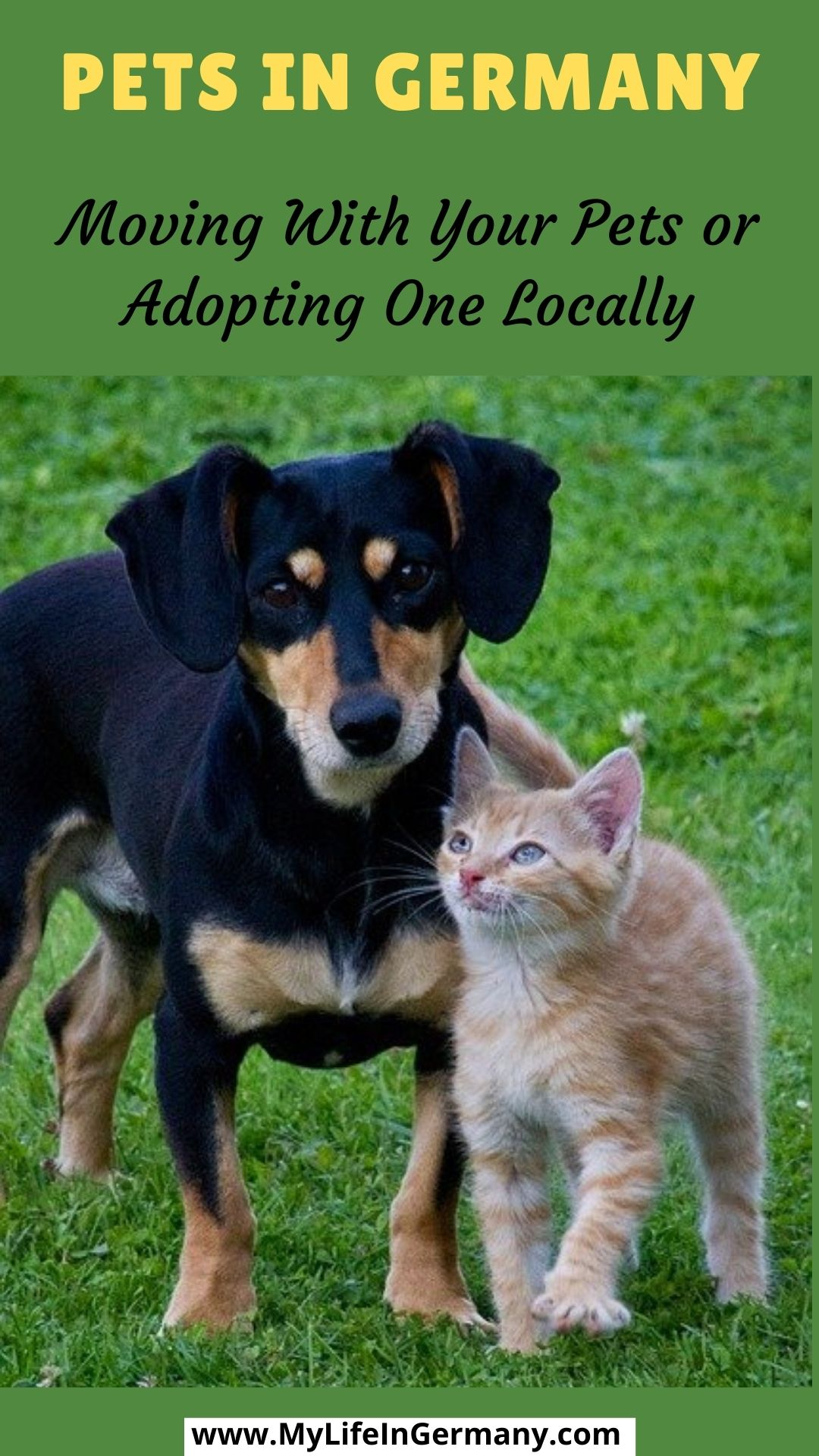 pinterest edited_pets in germany_cat and dog_bring your pets to germany or getting one in germany_my life in germany_hkwomanabroad